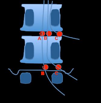 cuerpo vertebral 2