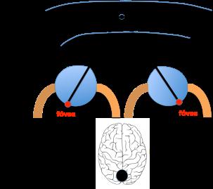 Figura 3. Espacio de Panum. Punto de Fusión Binocular.