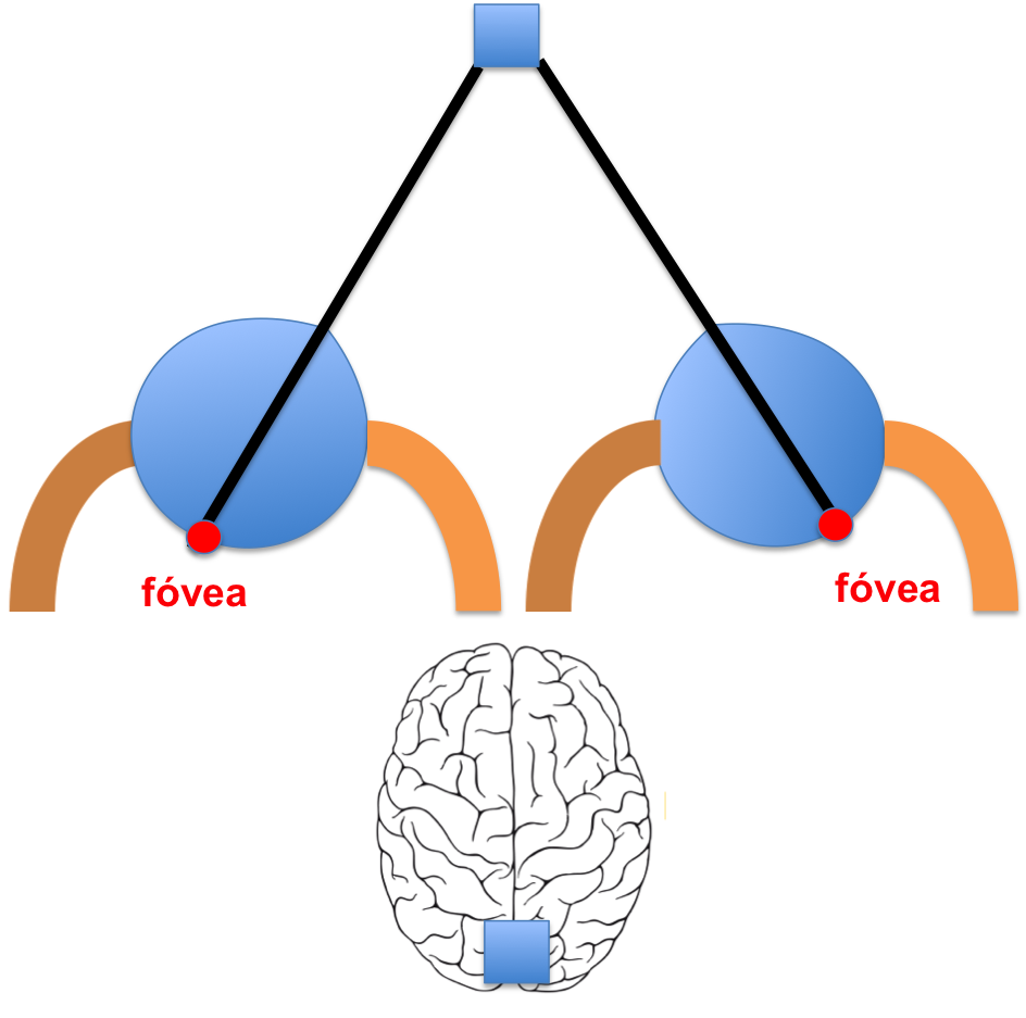 consultadeneurologia | Blog de Neurología: migraña, ictus