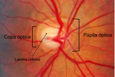 papila-optica